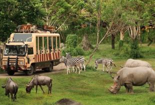 Tiket Masuk Bali Safari & Marine Park Mulai dari Rp 105.000